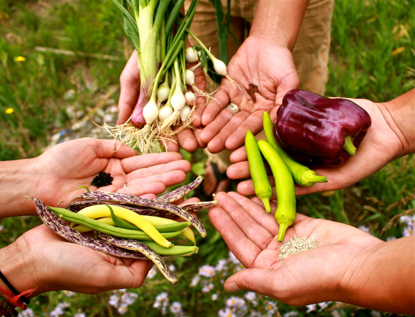 купить семена овощных культур
